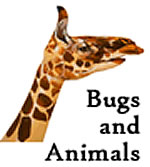 Bug and Animal Tunes: Download with Lyrics