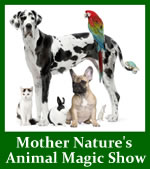 Mother Nature's Animal Magic Show Downloadable Mini-Album